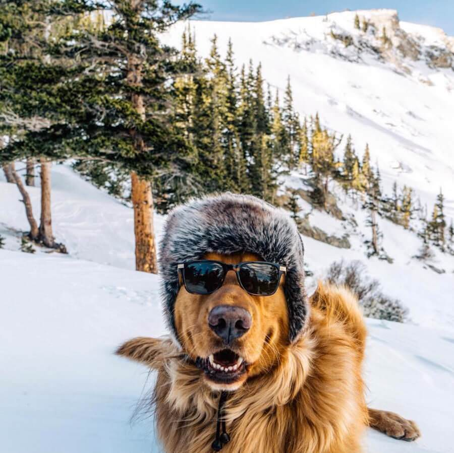 golden-retriver-trip-14