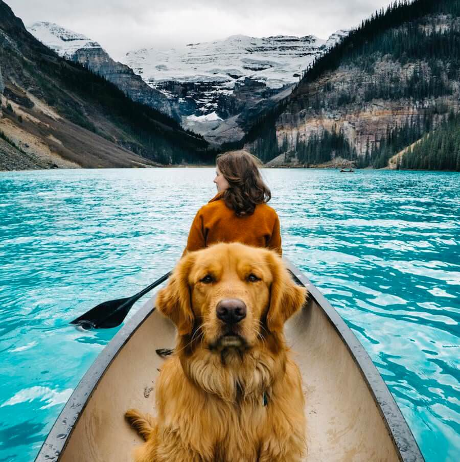 golden-retriver-trip-3