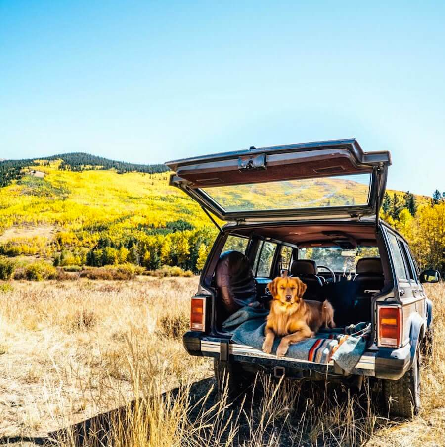 golden-retriver-trip-4