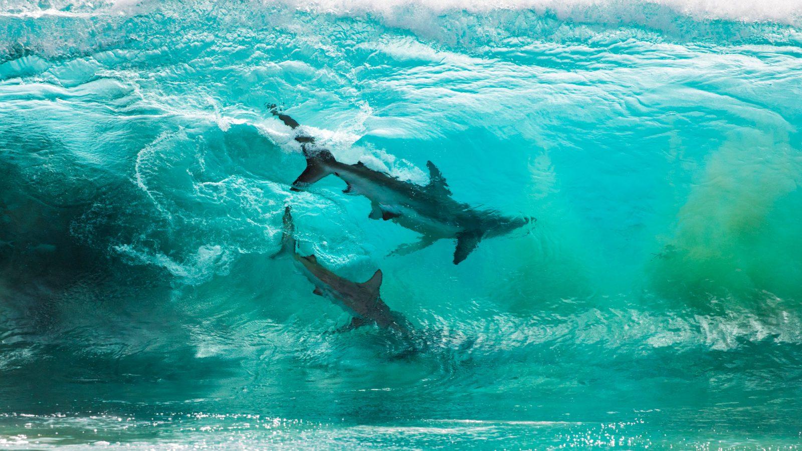 zdjęcie rekinów sean scott