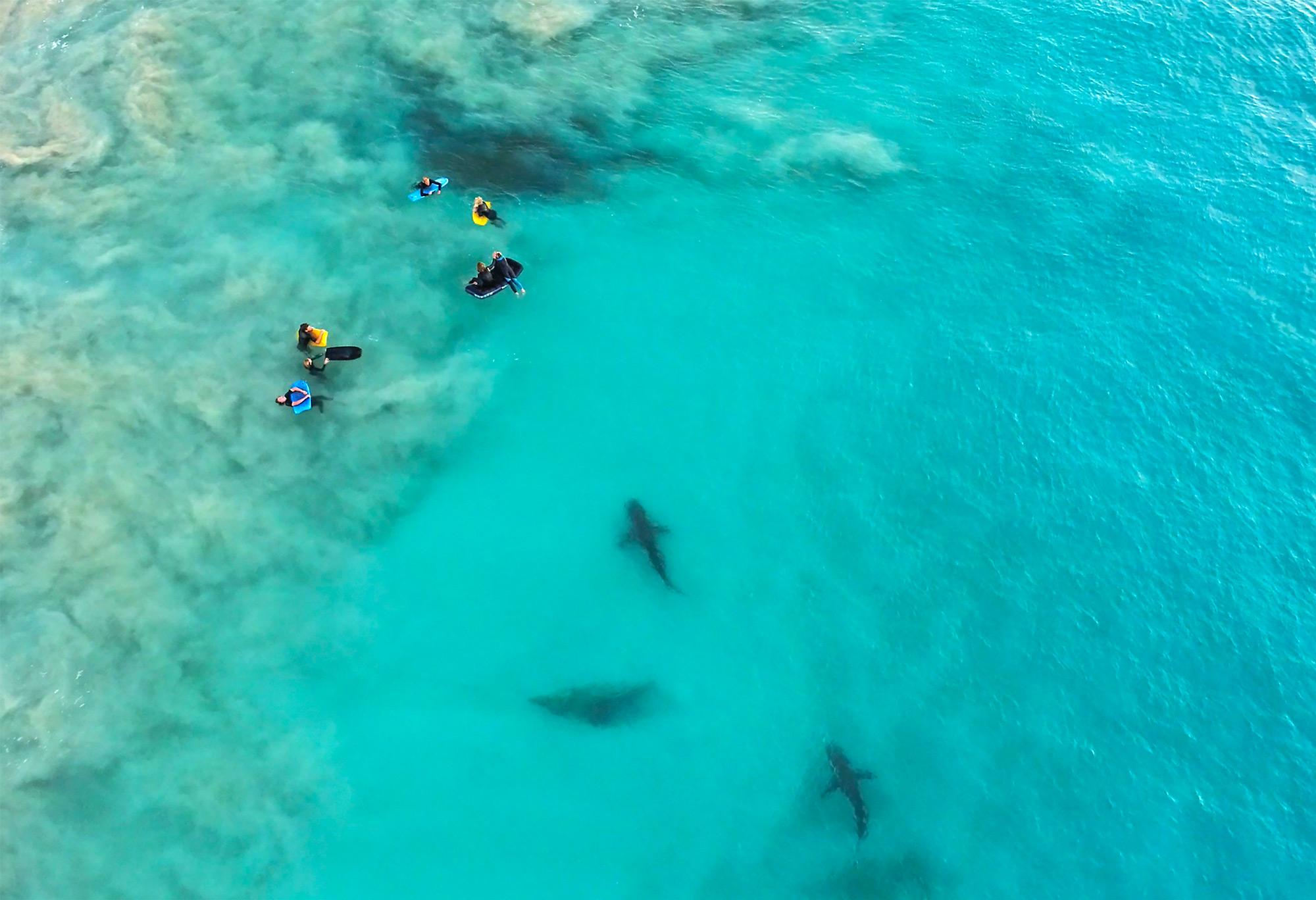 najlepsze zdjęcia rekinów Sean Scott